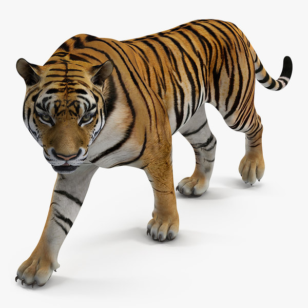 tiger walkig pose 3D