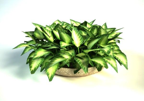 dieffenbachia pot interior 3D model