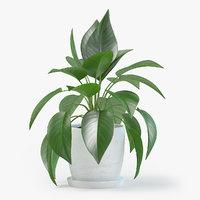 Jade Pothos Plant