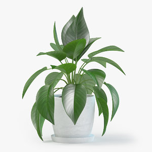 jade pothos plant pot 3D model