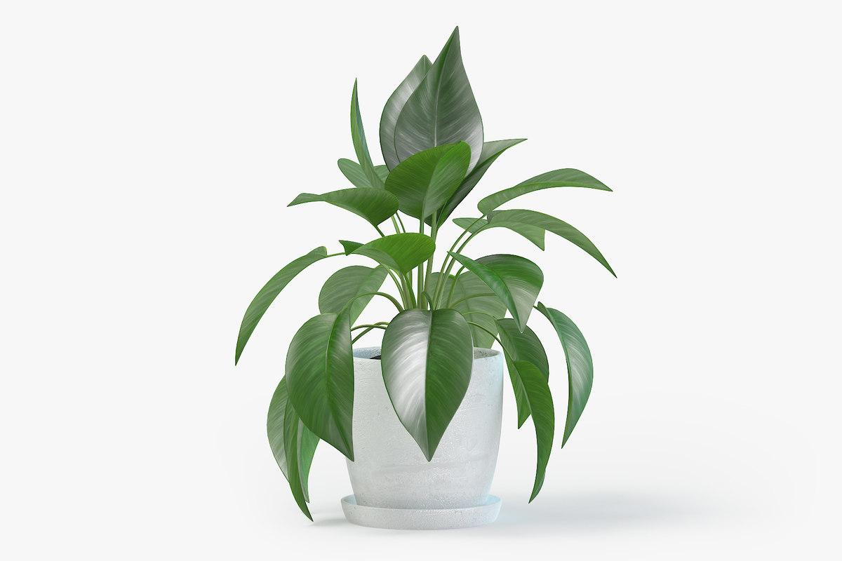jade pothos plant pot 3D model