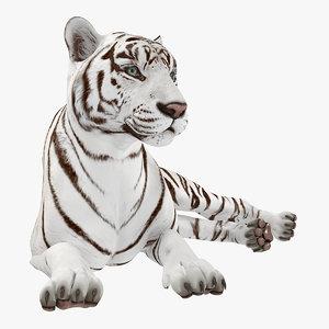 lying white tiger 3D model