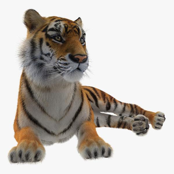 3D lying tiger fur model