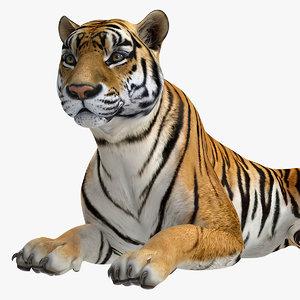 3D model lying tiger