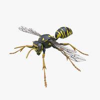 3D model european paper wasp
