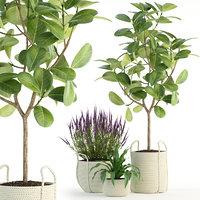 plants 87 3D model