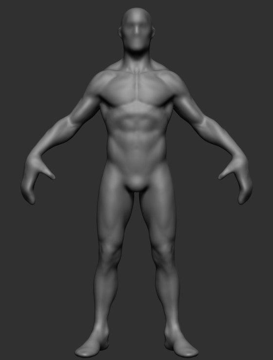 Anatomy ztl zbrush 3D model - TurboSquid 1272538