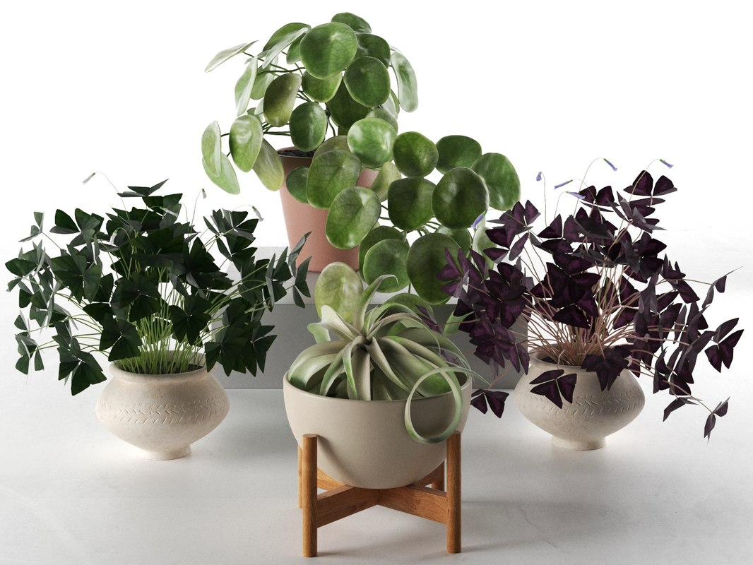 3D model pilea oxalis tillandsia plants