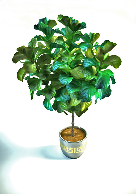 3D ficus white interior model