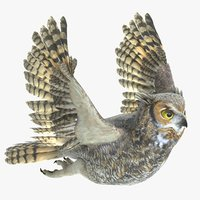 3D great horned owl animations model