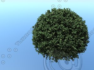 3D spherical tree model