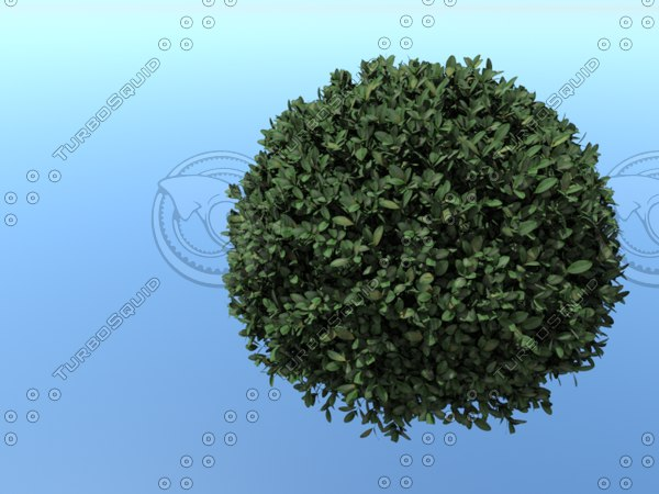 3D spherical tree model