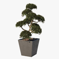 3D taxus garden bonsai tree