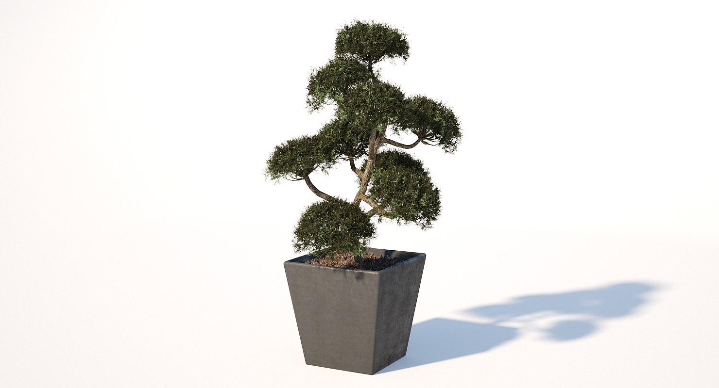 3D taxus garden bonsai tree