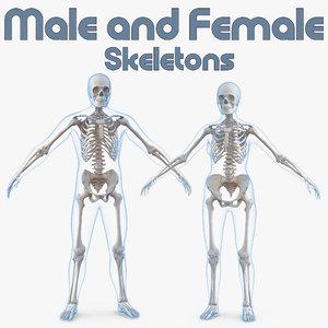 male female bodies skeletons 3D model