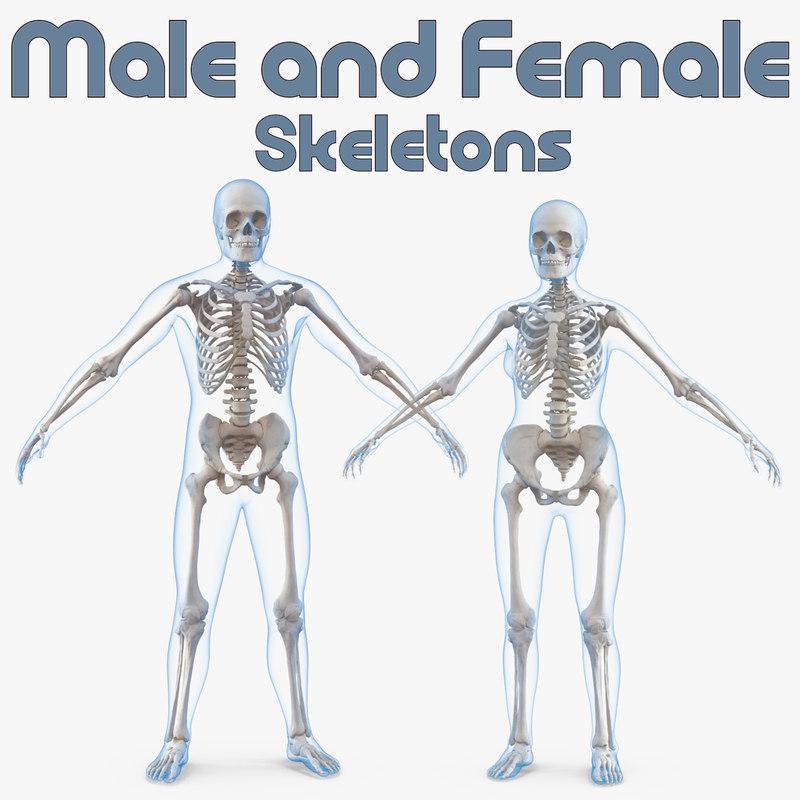 Male female bodies skeletons 3D model - TurboSquid 1273272