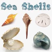 sea shells 2 model