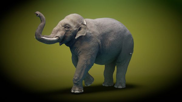 elephant animation 3D model
