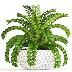 3D zamioculcas plants model