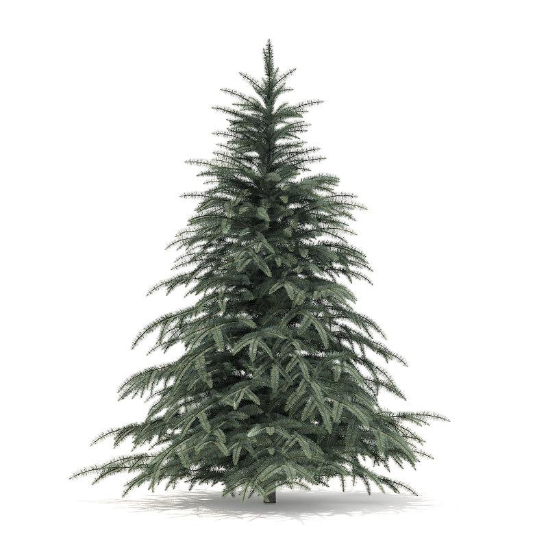 3D spruce tree 2 3m