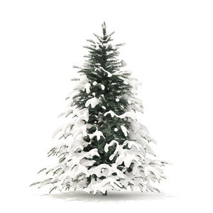 spruce tree snow 2 3D model