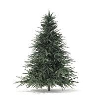 3D spruce tree 1 6m