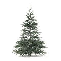 3D spruce tree 1 5m
