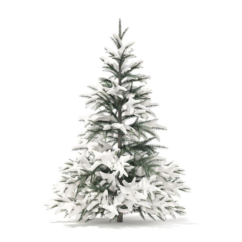 spruce tree snow 1 3D model