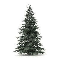 spruce tree 2 8m model