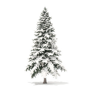 3D spruce tree snow 4
