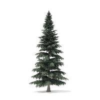 3D spruce tree 8m