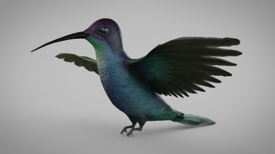 hummingbird humming bird 3D model