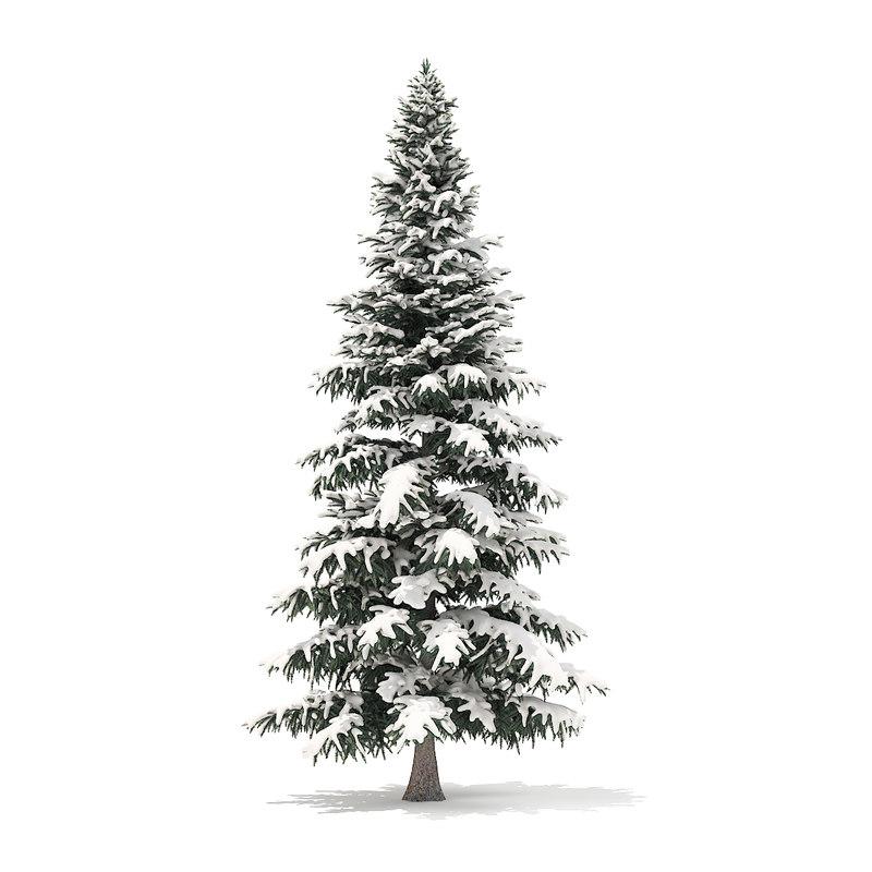 spruce tree snow 8m 3D