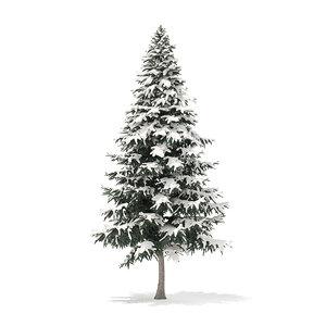 3D spruce tree snow 7