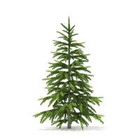 3D fir tree 1 2m model