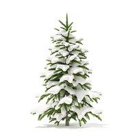 3D fir tree snow 1