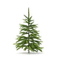 fir tree 0 8m 3D model
