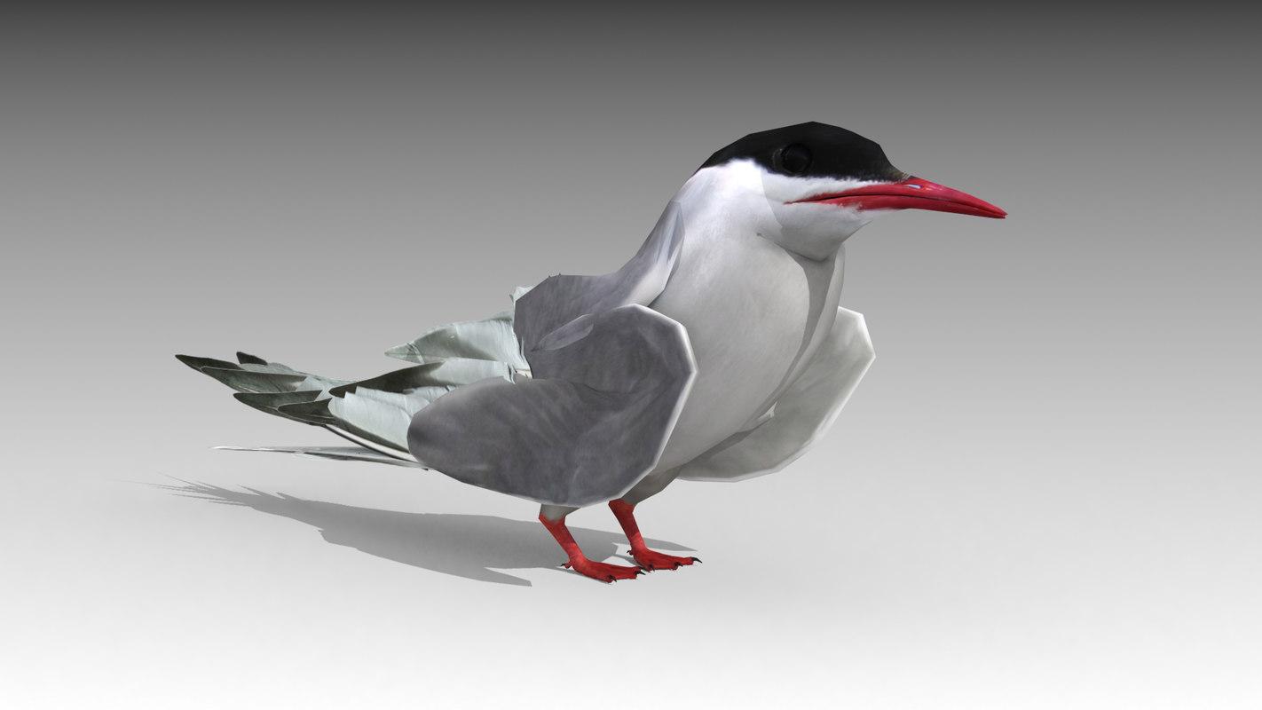 arctic tern 3D