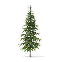 3D model fir tree 2 6m