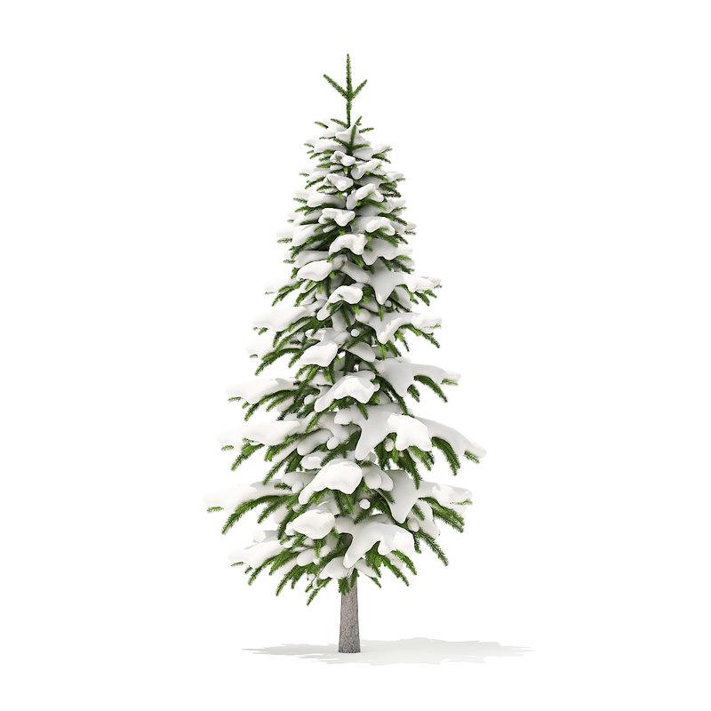 fir tree snow 2 3D model
