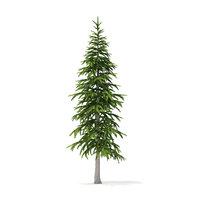 fir tree 3 4m 3D