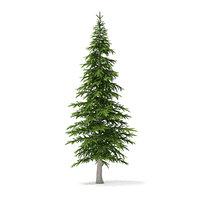 3D fir tree 4 5m