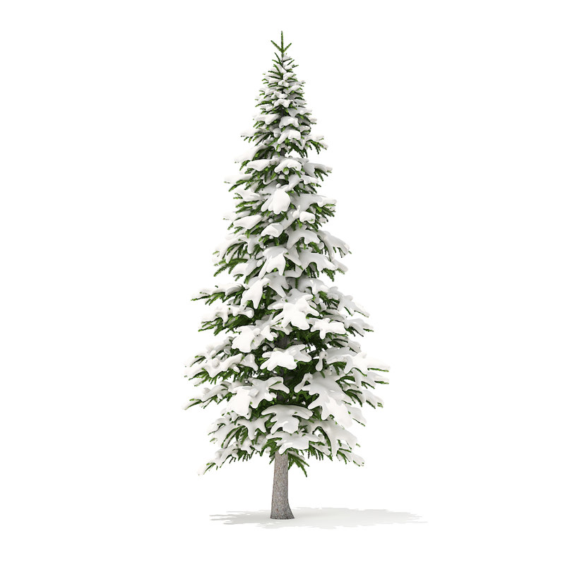 3D model fir tree snow 4
