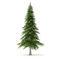 3D fir tree 5 9m
