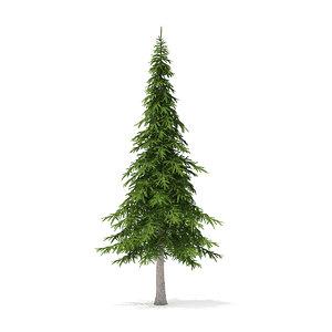 3D fir tree 7m