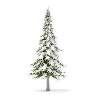 fir tree snow 7m 3D