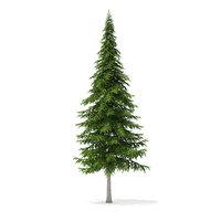 3D fir tree 10m