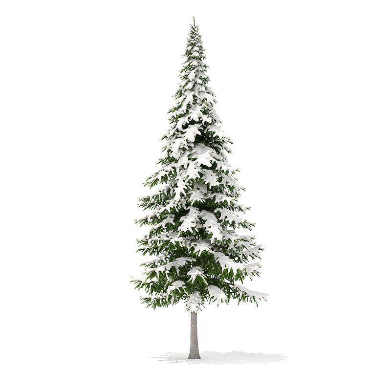 fir tree snow 10m 3D model