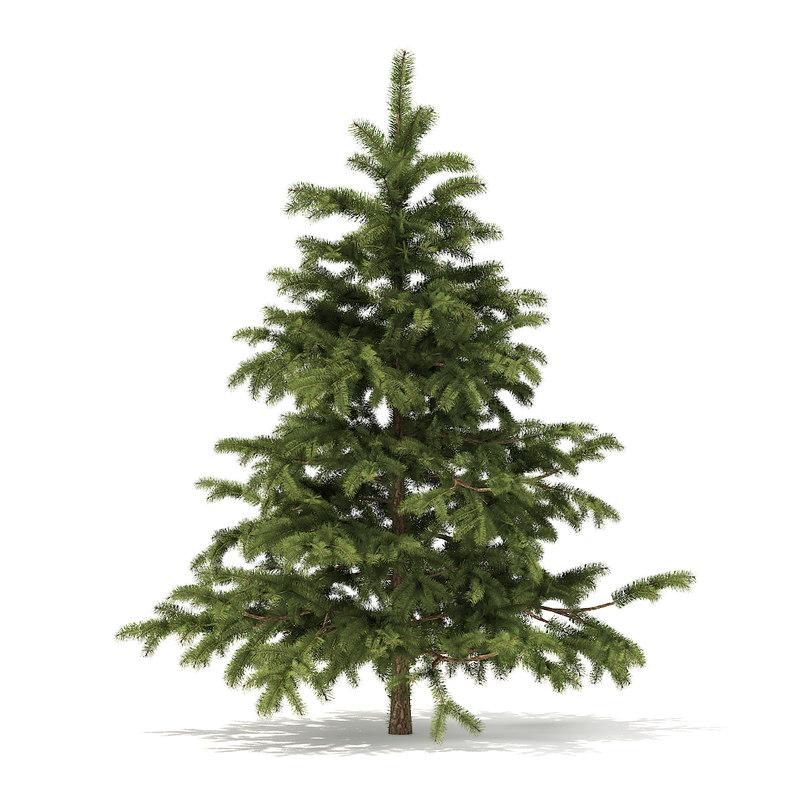 3D model pine tree 2 3m