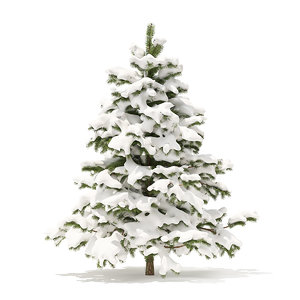 pine tree snow 2 3D model